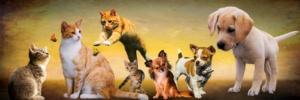 Cães e gatos após a administração de óleo de CBD para animais
