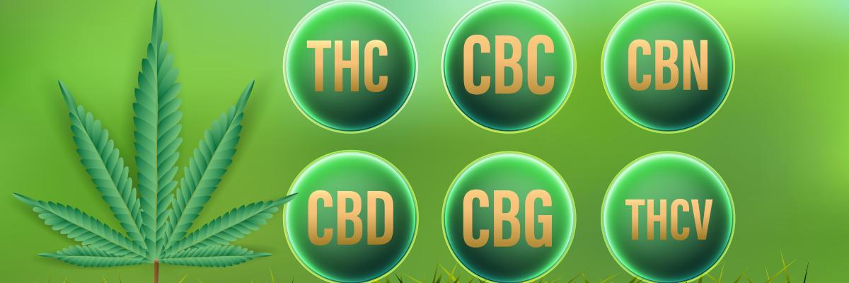 Canabinóides - Visão Geral: CBD, THC, CBC, CBN, CBG, THCV
