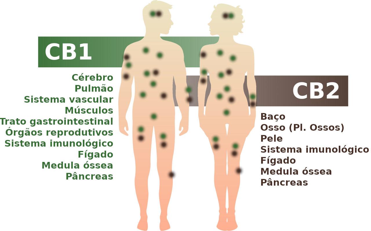 fibromatosis pulmonar sintomas de diabetes