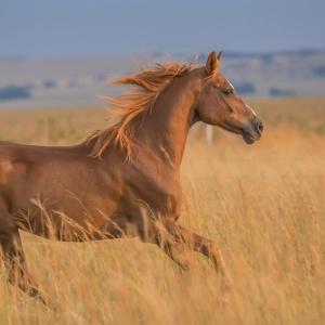 Cânhamo ativo adicionado para cavalo