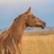 Cânhamo ativo para cavalos